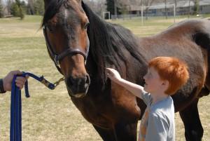 arabian-horse-656756_640