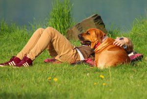 Der Hund als Begleiter