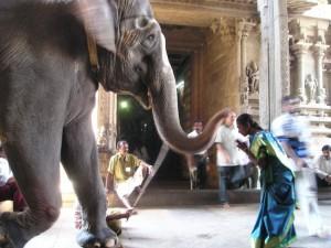 elephant-375_640