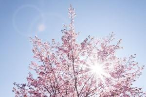 spring-733507_640
