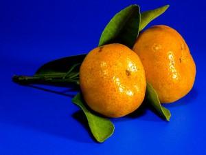 orange-228302_640