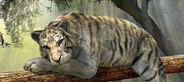 Ein satter Tiger mit gefülltem Bauch